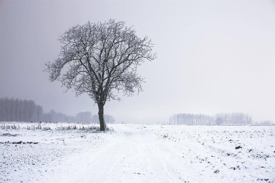 cold-snow-landscape-nature-large